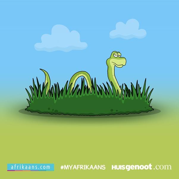 Slang in die gras[1] - resized