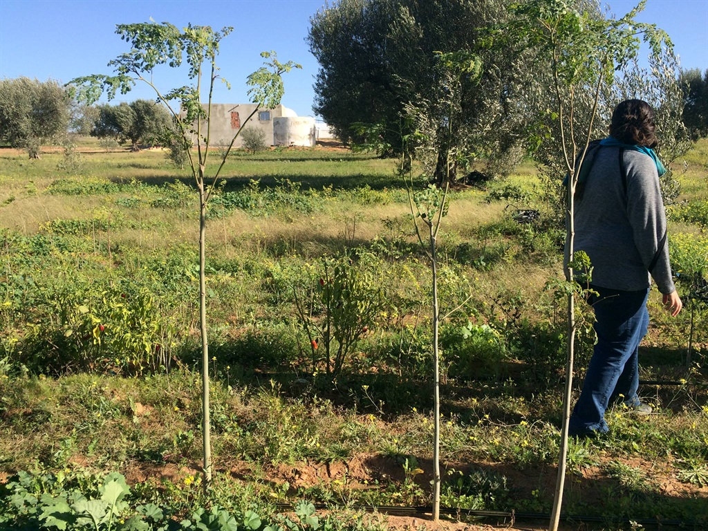 Taking back the land from the desert is increasingly important as we all feel the bite of climate change. Growing moringa trees, a member of the acacia family, is a vital weapon. Picture: Supplied