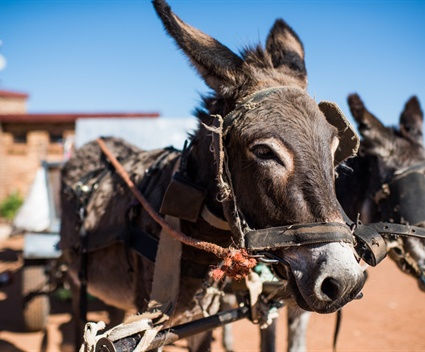 Two dads. Three babies. And one donkey saving the environment