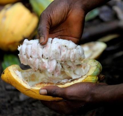 Amerikaanse doeane-owerhede ondersoek bewerings van kinderarbeid by kakao-verskaffers in die Ivoorkus. Amerikaanse sjokolade-firmas, insluitend Mars en Hershey, word daarvan beskuldig…