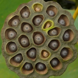 trypophobia, fear holes