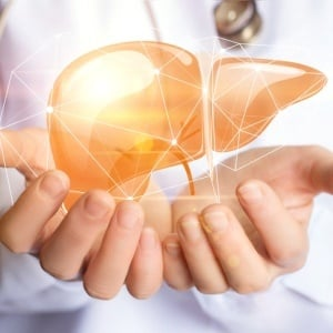 How exactly does the liver regenerate itself? A new study
