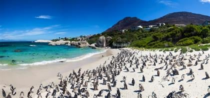 Boulders beach in Simons Town, Cape Town, South Af