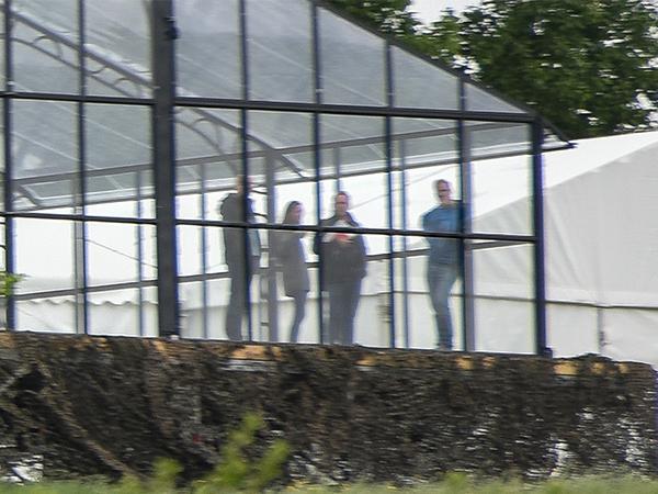 Pippa glass tent