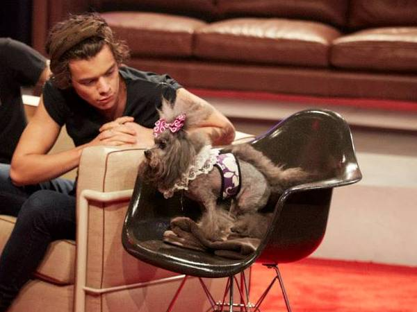 Harry having a heart to heart with a cute dog. Aw! PHOTO: Facebook