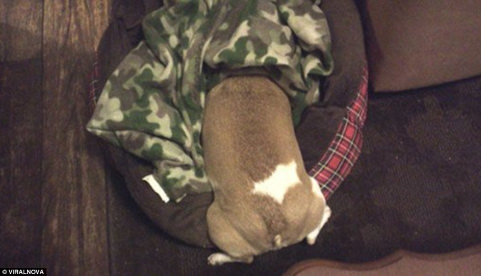 """""""I'll just hide my head under this blanket and pray that no one sees me..."""""""