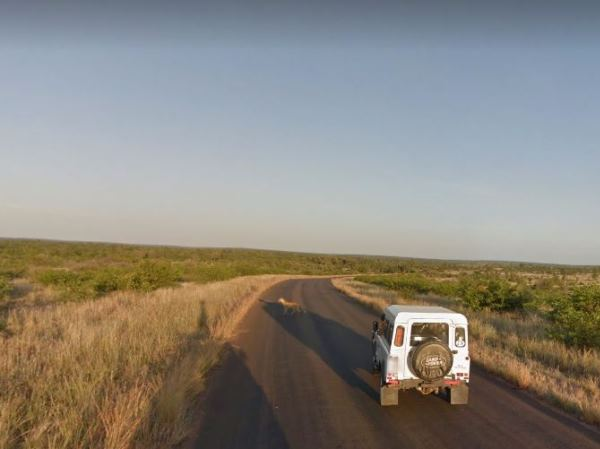 A lone leopard spotted on his travels across the park. PHOTO: Google Street View