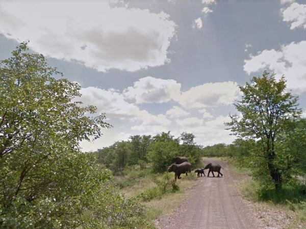 An elephant family crosses on of the Kruger's dusty back roads. PHOTO: Google Street View