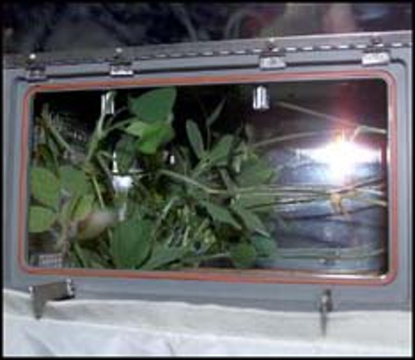 Picture of green plants in a glass box