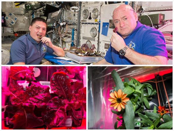 Collage: astronauts eating lettuce; romaine lettuce; zinnia