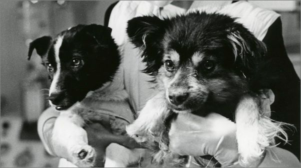 Veterok and Ugolyok, two cute Russian mutts that spent 22 days orbiting Earth in 1966 – and returned safely afterwards
