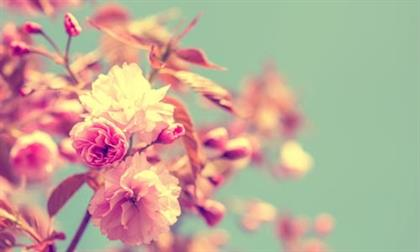 Spring inspired baby names parent24 baby names inspired by flowers mightylinksfo