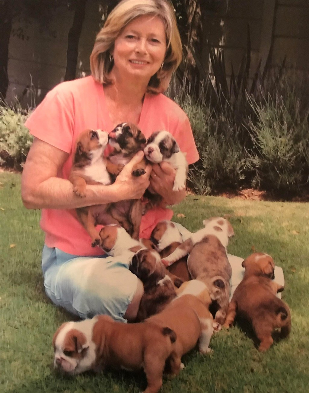 South Africa's five most expensive puppy breeds