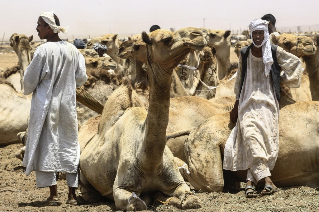 Herders stand by sitting camels at El-Molih camel market west of the Sudanese capital's twin city of Omdurman. (Ashraf Shazly / AFP)