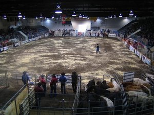 Jaarlikse rodeo.