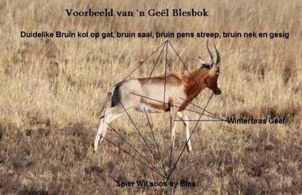 geel-blesbok.jpg-o'dell.jpg--600