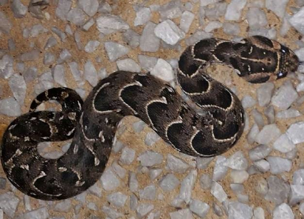 KwaZulu-Natal woman airlifted to hospital after snake bite - News24