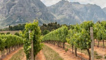WATCH: Bloggers take over Stellenbosch, show the world hidden wineland secrets