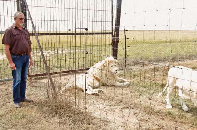 Nico admires his white lions.(Photos: Lubabalo Les
