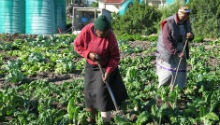 Western Cape is the leading province in land reform