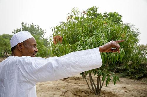 Muhammadu Buhari in Daura far in Katsina.