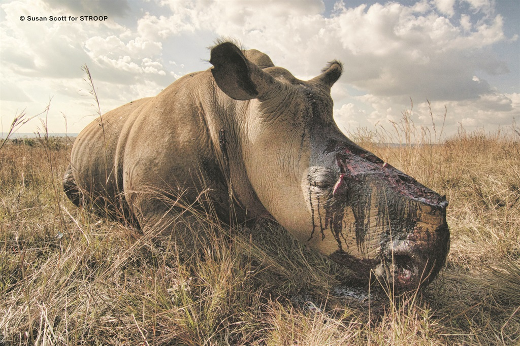 This pregnant rhino became another victim of poaching when she was killed for her horns. Picture: Susan Scott