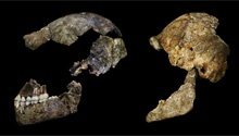 Here's what we know about Homo naledi so far...