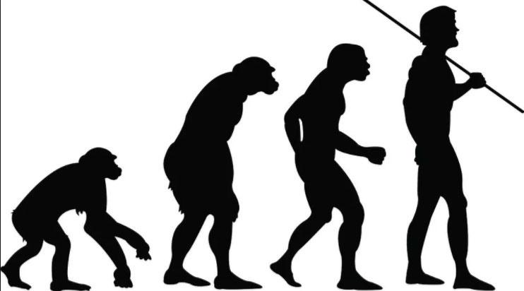 human evolution theory