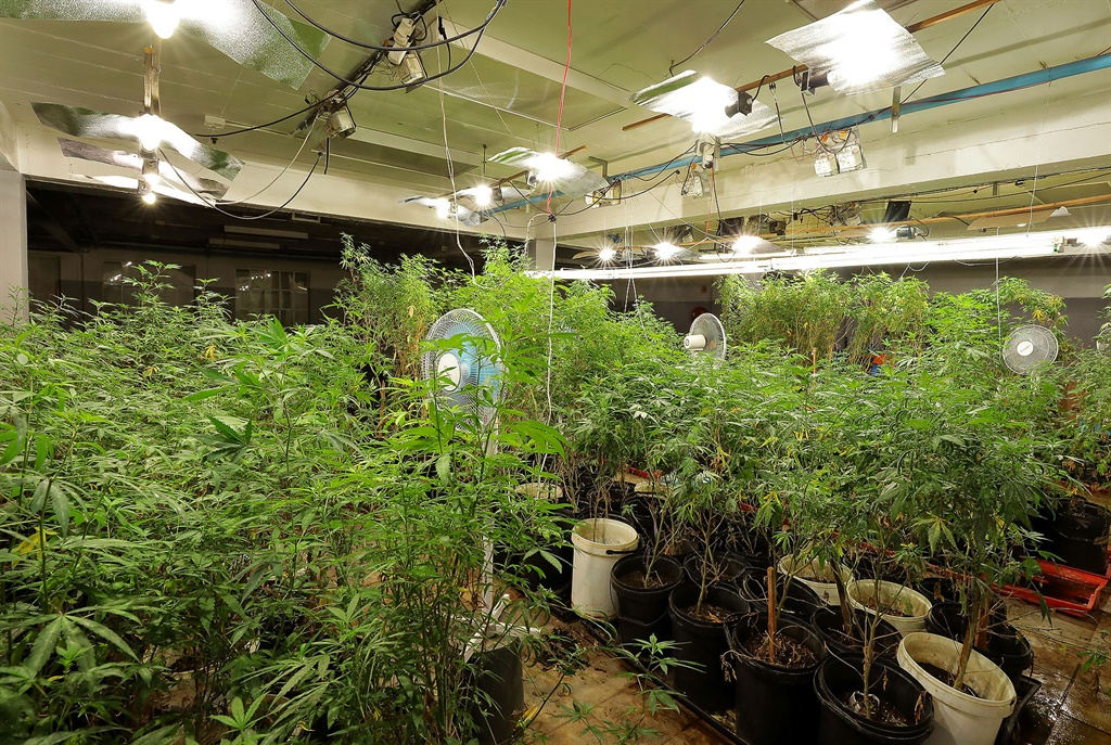 News24.com | One of SA's alleged major suppliers of dagga to spend Christmas in jail