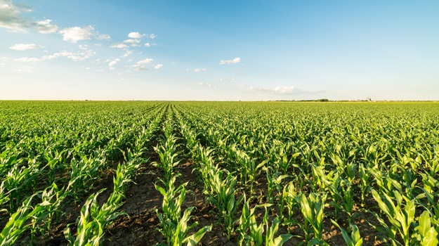 Wandile Sihlobo | When it comes to SA's farming plans, the devil is in the implementation | Fin24