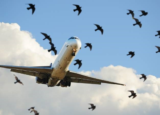 An aeroplane strikes birds.