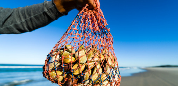 The abalone black market and 4 other South African