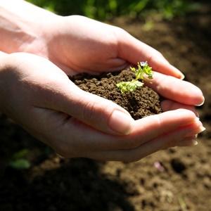 garden, home, how to, diy