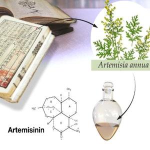 nobel, Artemisia   annua