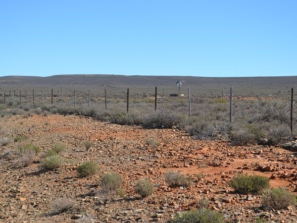 The drought in the Karoo has reached alarming proportions.  (Michelle van der Spuy, Landbouweekblad, file)