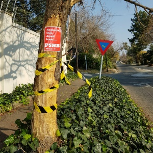 A dead street tree taped by a local activist to raise awareness of the danger they pose. (Supplied)