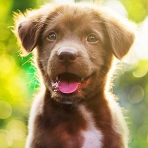 Are some dog breeds more prone to causing allergies than others?