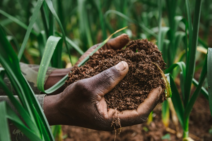 A farmer holds soil in his hands. (iStock)