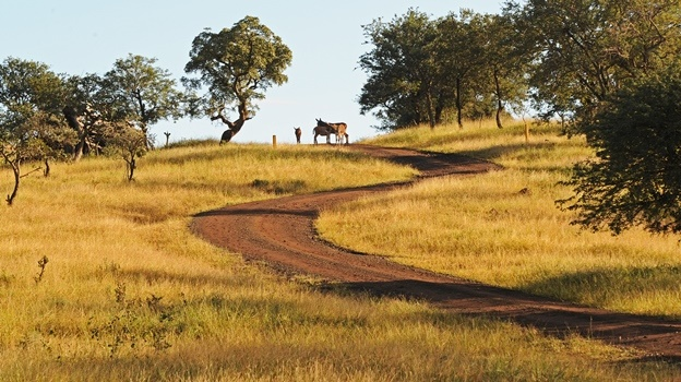 A few donkeys photographed a the top of a winding road in Zululand. Donkeys are under threat from the Chinese medicine market.