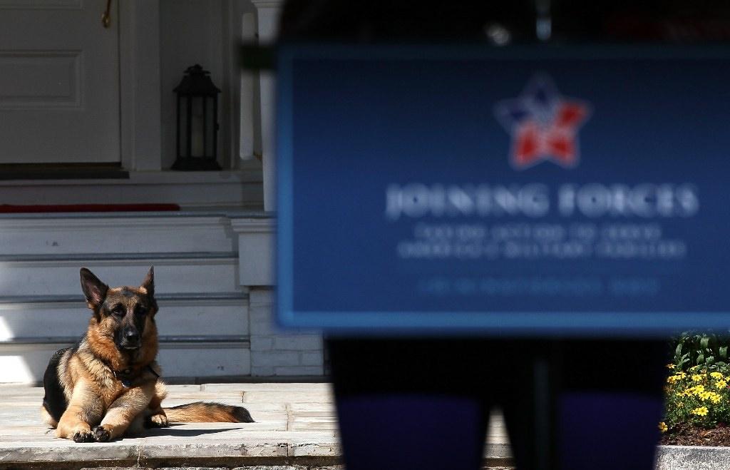 Joe Biden's dog, Champ, lays down during speeches