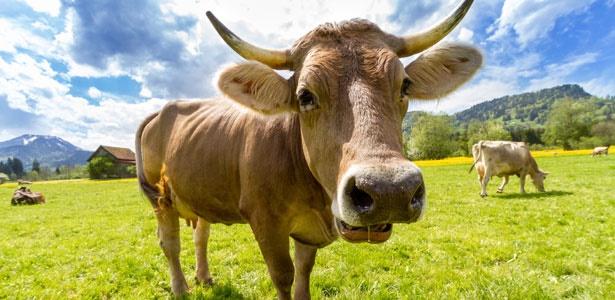 green monday,animals,green,planet,vegetarian,meat
