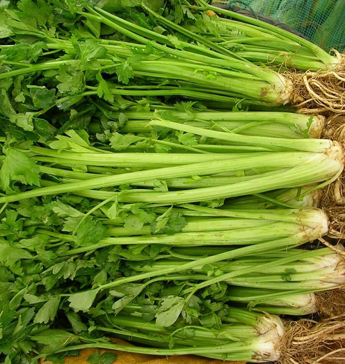 Celery and health benefits.