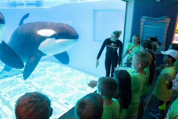 seaworld banned from breeding killer whales