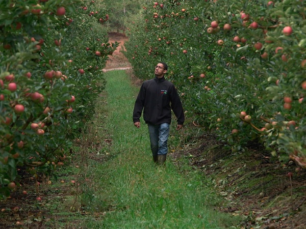 Ricard Myburgh, pomologist and successful farmer, and his family, run their flourishing farm and fruit packing business.
