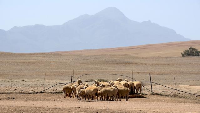 News24.com | Nuwe verslag oor klimaatsverandering onderstreep die noodsaaklikheid om grond op kort en lang termyn te bestuur