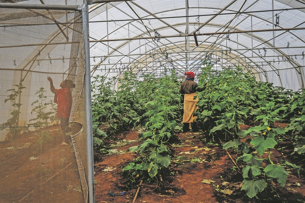 Workers at a Vegetable Farm.