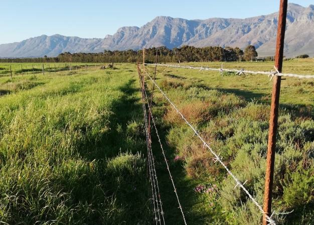 Elderly couple robbed on their farm in Eastern Cape