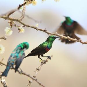 marico biosphere reserve birds north west south af