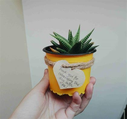 plant eco gift