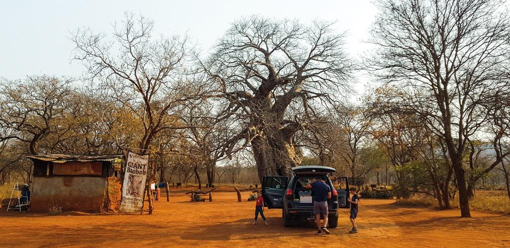 Giant Baobab, near Leydsdorp in Limpopo